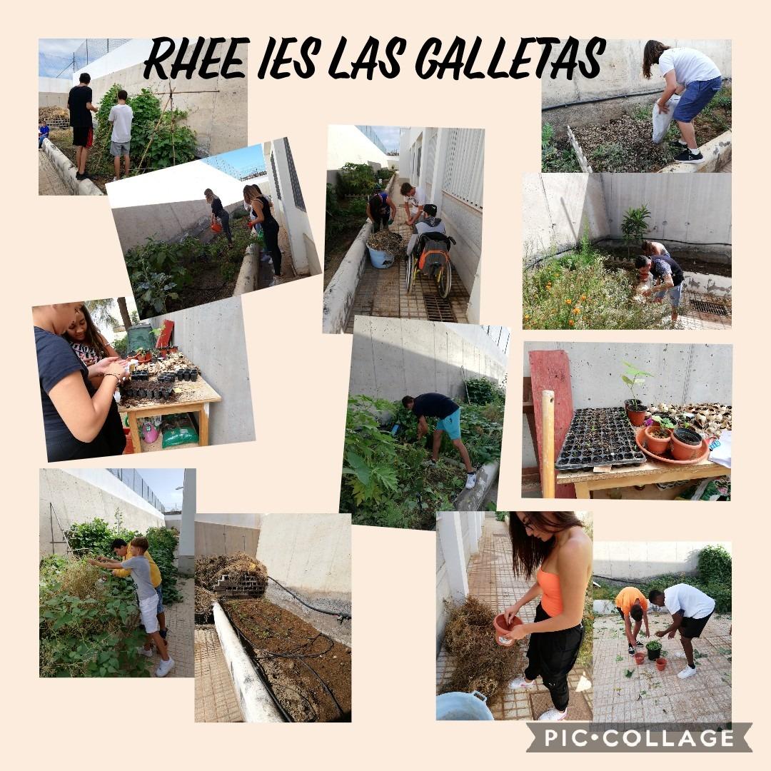 Collage del Huerto Escolar Ecológico del IES Las Galletas